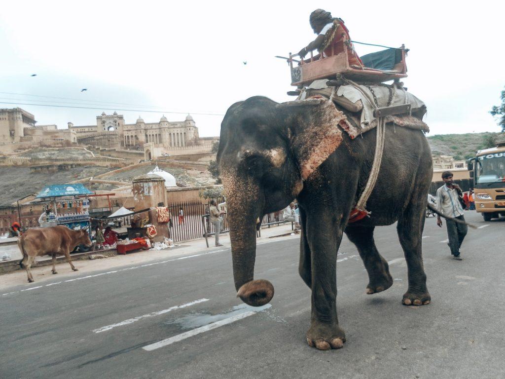 elefant-indien
