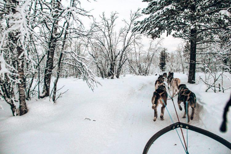 schlittenhunde-lappland