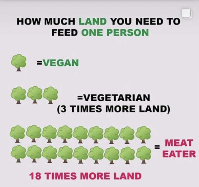 vegan-gruende